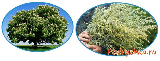 Каштановое дерево и полынь