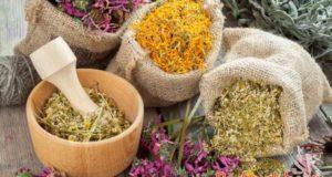 Травы от кашля: сухого, мокрого, аллергического, от курения
