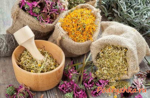 Травы от кашля - рецепты отваров для питья, ингаляций и полосканий